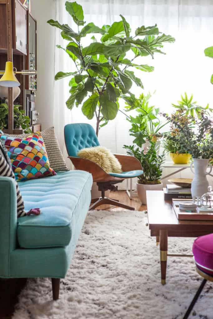 house-plants-for-any-home