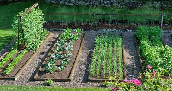 Vegetable Gardening For The Beginner - Kristina Wolf Design